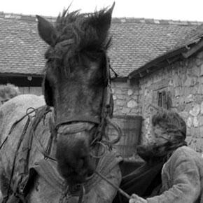 mediacritica_the_turin_horse